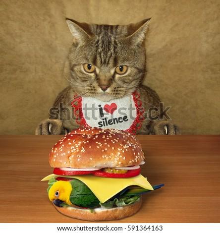 Cat Eat Owner Food