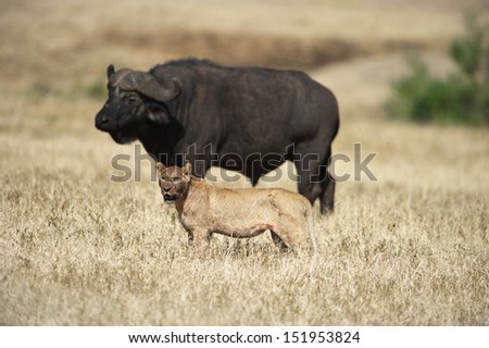 The hunter and its prey - stock photo