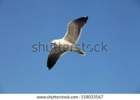 The image of a seagull