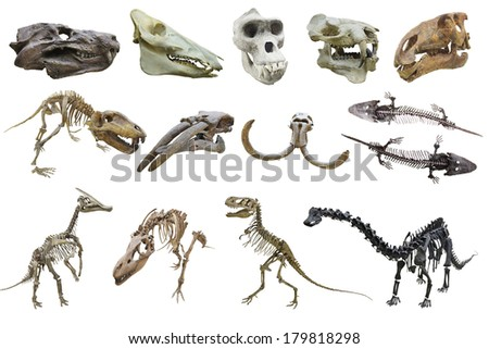 The image of dinosaur's skeletons - stock photo