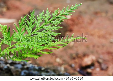 The image of fern growing on the rock - stock photo