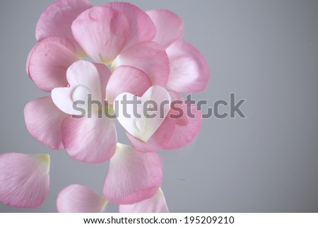 the image of flower