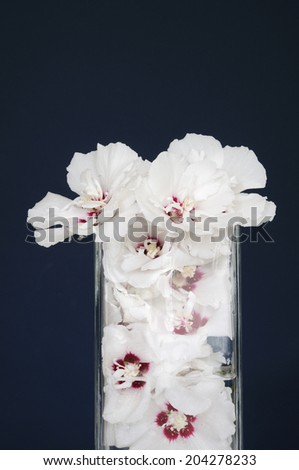 The Image Of Flower Arrangement