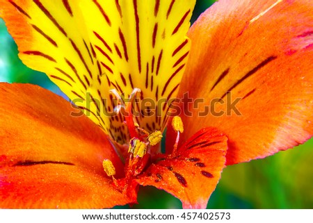 the image of garden flowers on a green background Alstroemeria