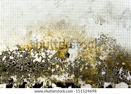 the image of moss on the glass - stock photo