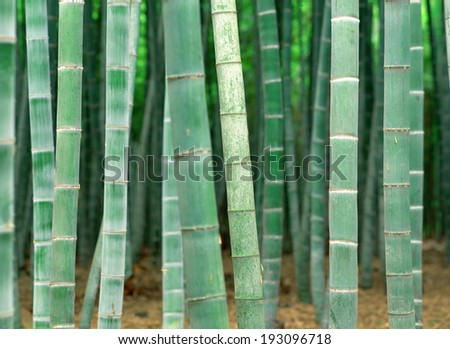 The image of nature,Green image - stock photo