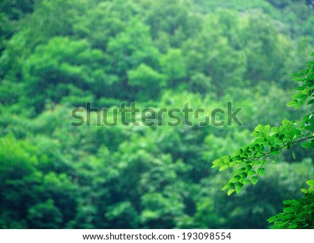 The image of nature,Green image