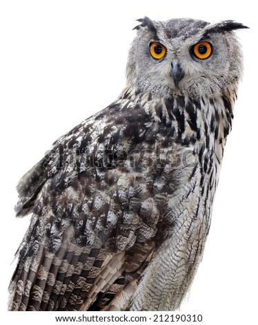 The Indian eagle-owl, also called the rock eagle-owl or Bengal eagle owl, (Bubo bengalensis) - a species of large horned owl found in the Indian Subcontinent. - stock photo