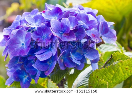 Indigo Plant Stock Photos Images Amp Pictures Shutterstock