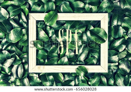 The inscription of the spa in a white frame against the background of green leaves. Concept: spa, fashionable green color, nature