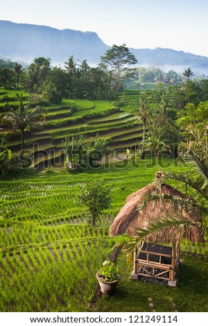 The intense green hillside of a traditional rice terrace in the beautiful Sidemen Valley of east Bali, Indonesia is one of the most tranquil places on earth. - stock photo
