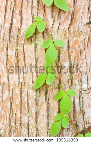 the ivy on tree trunk - stock photo