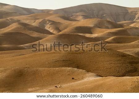 The Jude Desert, Israel - stock photo