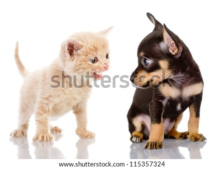 the kitten abuses a puppy. isolated on white background - stock photo