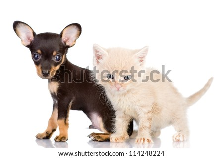 the kitten and puppy with astonishment look. focus on a kitten. isolated on white background - stock photo