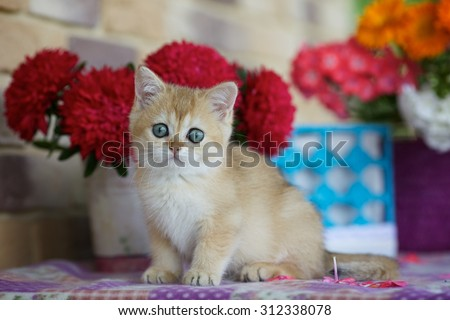 The kitten is sitting on the table on the background of bright asters and colored baskets