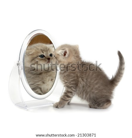 The kitten looks in a mirror