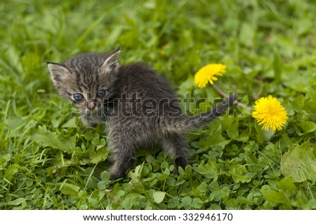 The kitten plays in a grass
