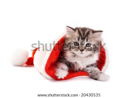 The kitten plays on a white background