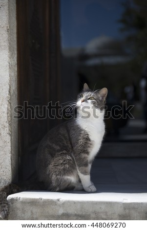 The kitten standing on the threshold