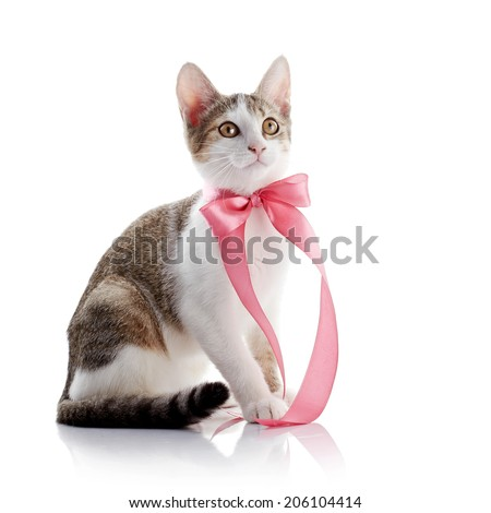 The kitten with a pink tape. Multi-colored small kitten. Kitten on a white background. Small predator. Small cat. - stock photo