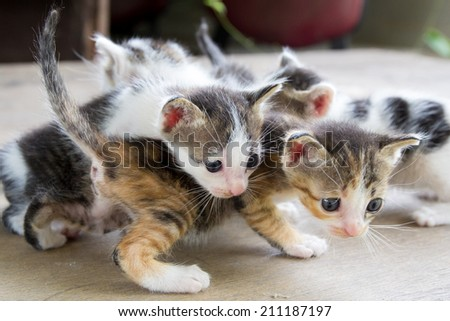 the kittens who were played among themselves.