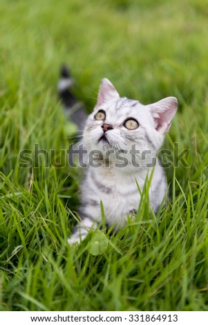 The kitty lying on the grass