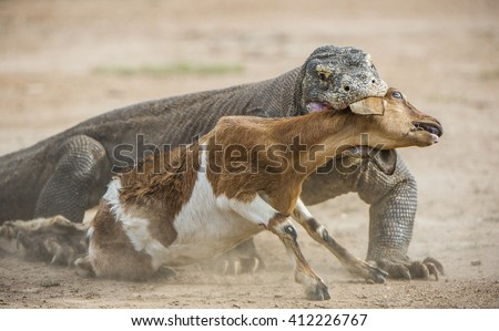 Animal Attack Stock Images, Royalty-Free Images & Vectors ...