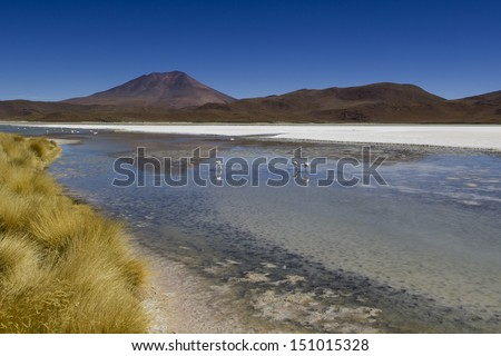 The  Lagoon of Bolivia