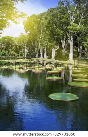 The lake in park with Victoria amazonica, Victoria regia. Mauritius. - stock photo