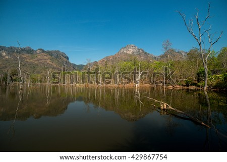 The lake of dead trees - stock photo