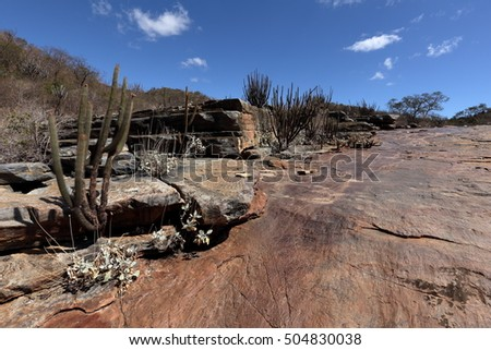 The landscape of Caatinga in Brazil