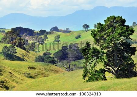 The landscape of the Hobbiton Movie Set and Farm, Matamata New Zealand. - stock photo