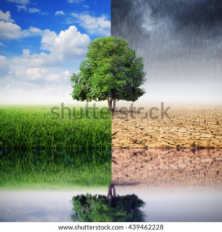 The landscape of trees and reflections on the changing environment, the concept of climate change.