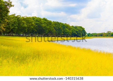 The landscape of yellow grass and pond for use in background - stock photo