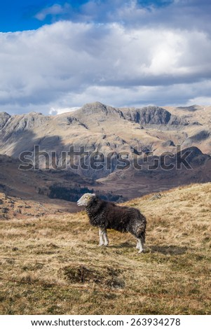 The Langdales