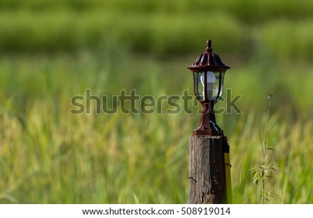 The lantern in the paddy.