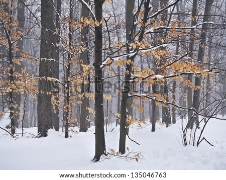 The last leaves of Autumn are covered in snow in this Central New Jersey woodland.
