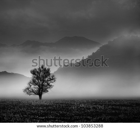 The Last Tree  (conceptual surreal style) - stock photo