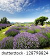 The Lavender Valley of Oregon - stock photo