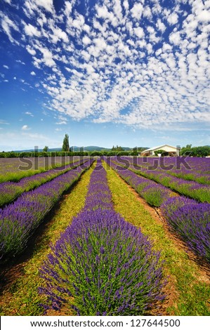 The Lavender Valley of Oregon