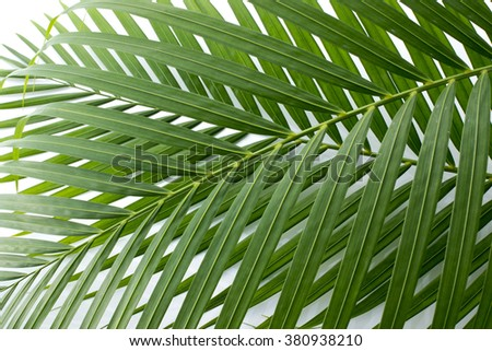 The leaf of the palm - stock photo