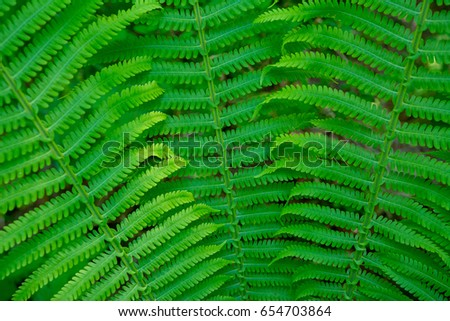 the leaves of the fern are located a fan