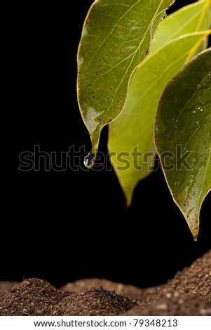 The leaves of young shoots covered with water droplets. - stock photo