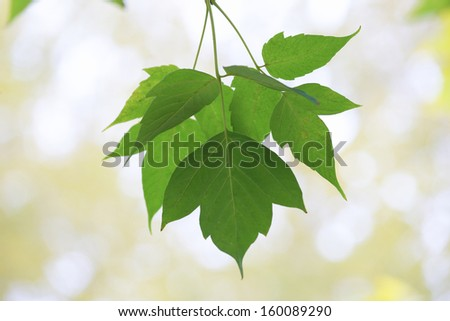 the leaves on the tree
