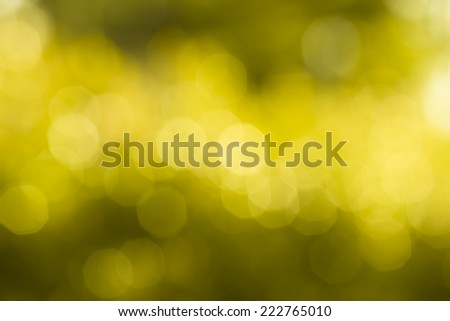 The light bokeh abtract nature background