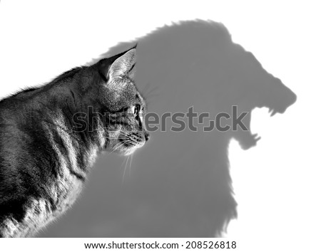 The Lion Within - Profile of a house cat casting a lion's shadow on a white wall  - stock photo