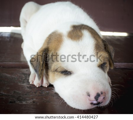 The littel puppy sleeping on wooden