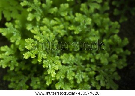 The little bright green fern and moss take photo by close up, ferns are clearly in once spot and soft or blur around picture for picture background, wallpaper. - stock photo