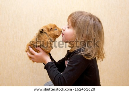 The little child kissing the guinea pig. Love for animals concept. - stock photo